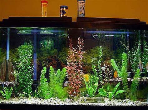 good aquarium decorations http monpts com some 15 best fish tank decor ideas images on pinterest