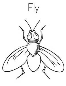 House Fly Coloring Page  Sky sketch template