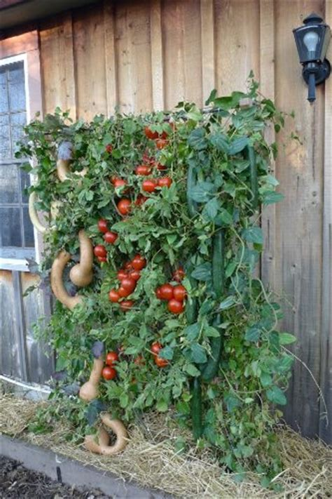 What Can You Grow In A Vertical Garden How Easy Is This To Build A Mesh Tacked To A Wooden