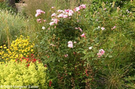 Garden Images Thymus 1 Greenhouse Border June