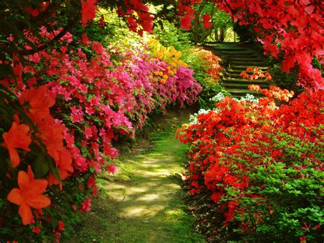 Beautiful Flower Garden Wallpaper Flower Garden Backgrounds Wallpaper Cave