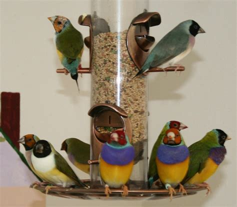 aviary lighting for finches indoor finch aviary gouldian finch indoor aviary