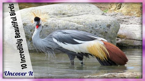 pictures of beautiful birds with their names www imgkid
