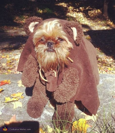 yorkie ewok costume re look at this puppy road forum yamaha road