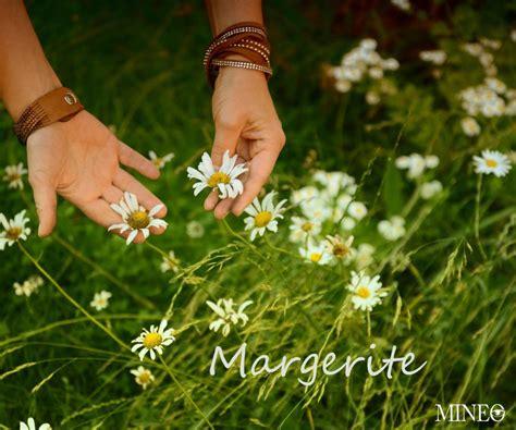 mineo fotodesign yasmin mineo essbare wildkr 228 uter margerite froh leben org