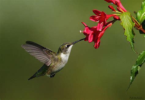 float like a butterfly drink like a hummingbird