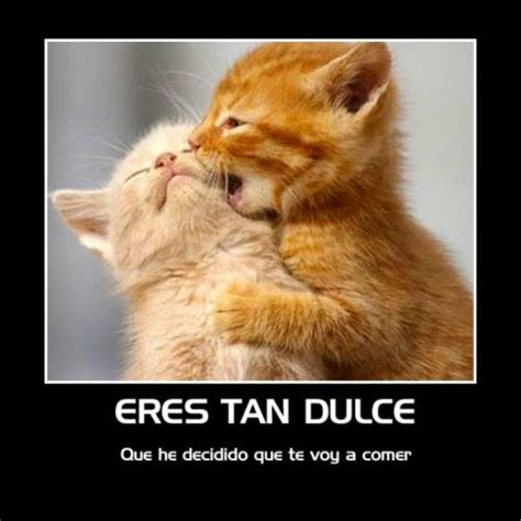 imagenes de gatitos llorando amor hoy te siento cerca t e p e g a s t e