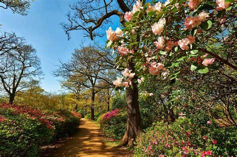 richmond park plantation richmond park the royal parks