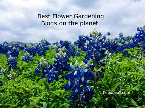 Top 30 Flower Gardening Blogs And Websites For Flower Flower Garden Blogs