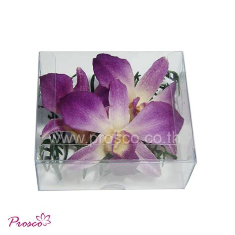 Box A Single Purple Multicolor Preserved Flower Preserved Dried Orchid For Decoration With Fern In