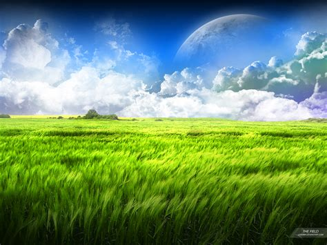 The Field damien wallpapers grass and field wallpaper