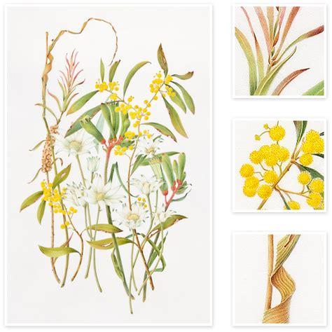 libro botanical sketchbook inspiration and mixed flowers australian natives sharon field botanical artist inspiration for botanical