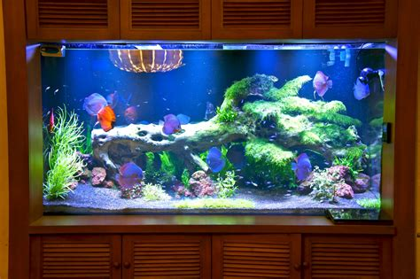 are led lights for planted aquariums led aquarium lighting orphek july 2013