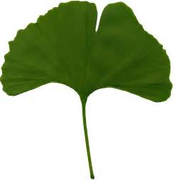 carpe diem haiku ginkgo leaves el appleby short stories