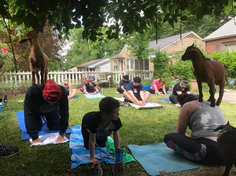 coolray hairstyles gwinnett braves to host goat yoga lawrenceville ga patch