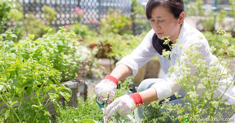 Gardens Drugs by From Garden To Pharmacy The Cancer In Your Vegetables