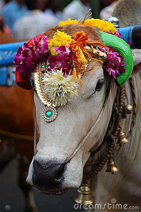 sacred  royalty  stock photo image