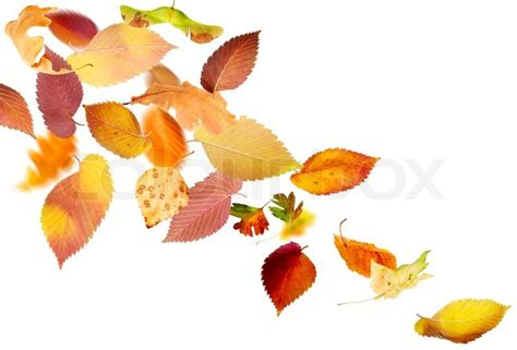 Different Falling Autumn Leaves On White Background Stock Photo Colourbox Fall Leaves On White Background