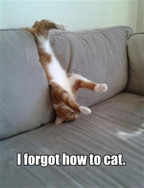couch fun funny cat pictures with captions with guns with quotes