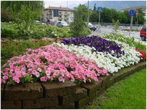 pianta fiorita tutto l anno aiuole con fiori per tutto l anno giardinaggio fai