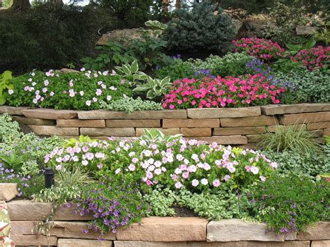 colorful flower plants for backyard or front yard