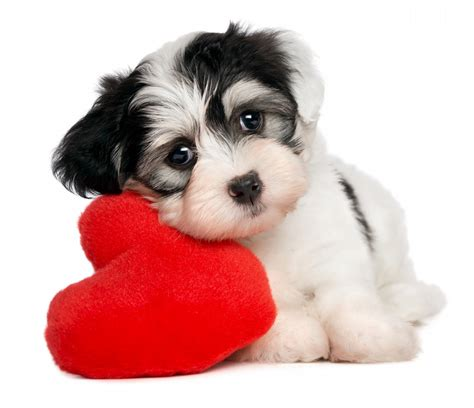 pet valentines step away from the your and s day