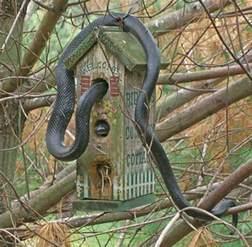 snake in bird house collegehumor post