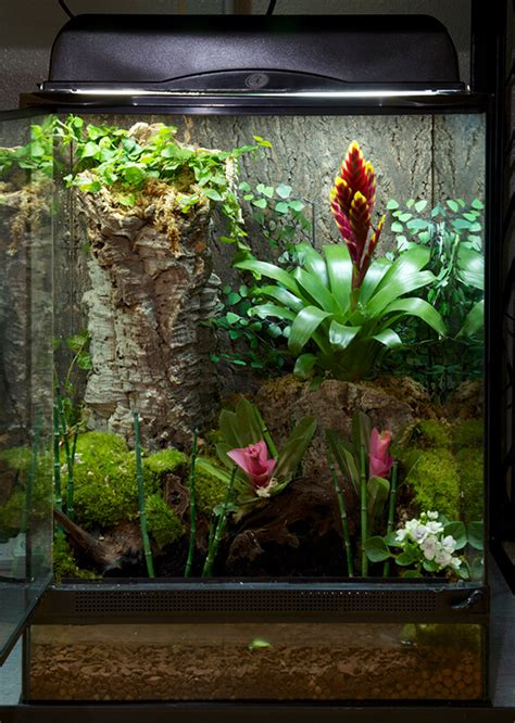 Home Decor Stores Australia by Lizard Terrarium Plants From Around The World Infolific