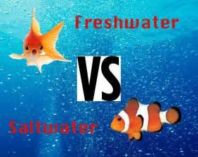 Freshwater vs Saltwater Aquariums   YouTube