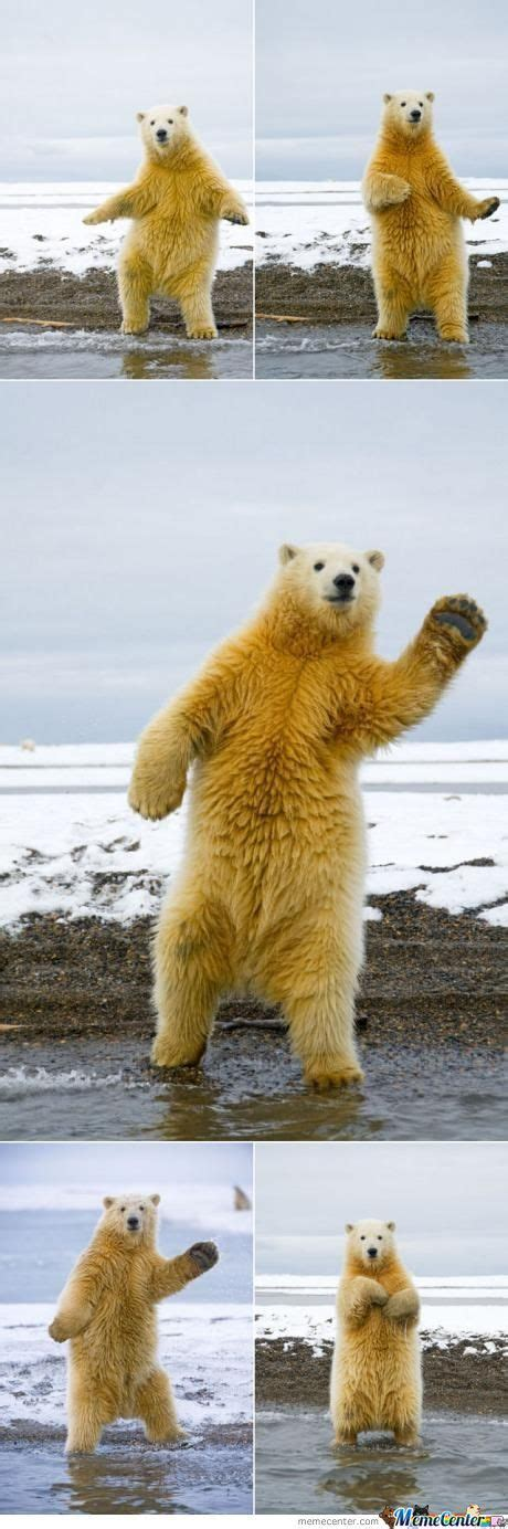 Dancing Polar Bear Meme - this polar bear can dance by mlg meme center