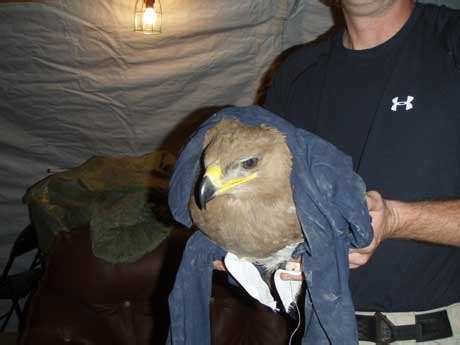 wounded eagle the politically correct of the in kentucky books schumer opens golden door for wounded afghan eagle need