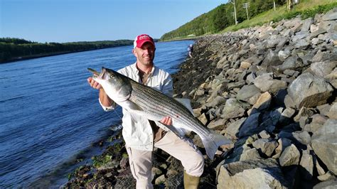 fishing report cape cod krapp with a one taken on an sp minnow