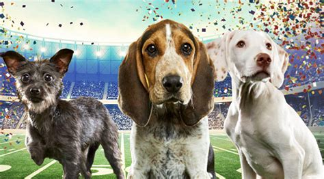 who won the puppy bowl 2017 an important breakdown of the dogs in this year s puppy bowl