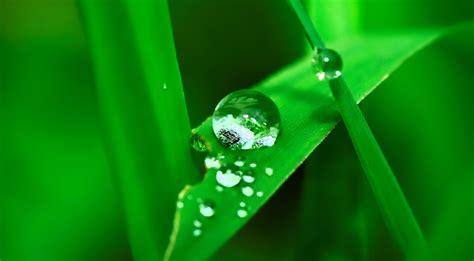 Wasserpflanzen Pflege wasserpflanzen im nano aquarium informationen und pflege