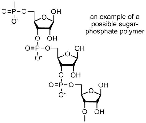 carbohydrates a polymer carbohydrates a polymer of carbolhydrates
