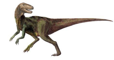 dinosauri volanti dinosauri in puglia