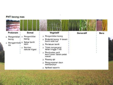 hama penyakit tanaman padi