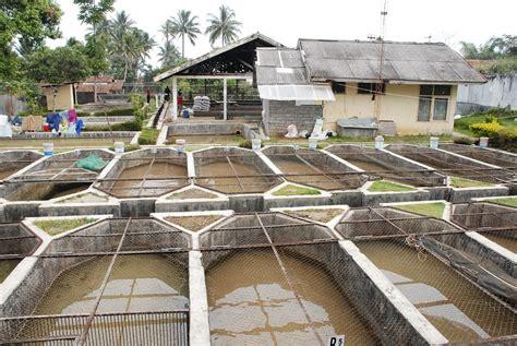 cara membuat hidroponik kolam ikan cara membuat kolam ikan nila yang ideal aengaeng com