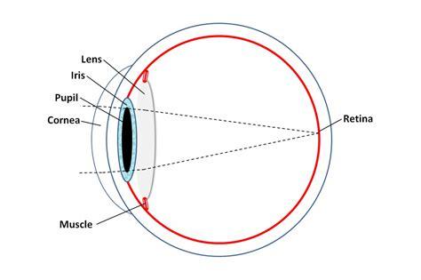 diagram of eyeball simple eye diagram anatomy organ