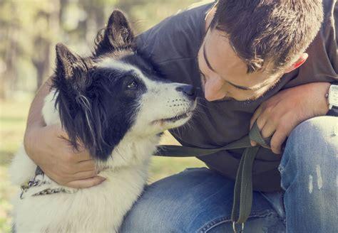 Hund Adoptieren Das Sollten Sie Beachten PURINA
