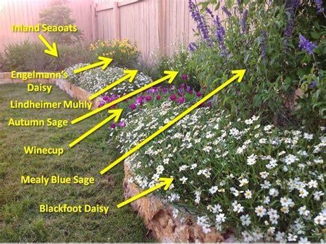 heat tolerant crops 25 best ideas about texas plants on pinterest texas