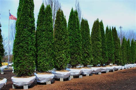 christmas tree farms in southeast michigan best 28 tree farms in southeast michigan 28 best tree farms in