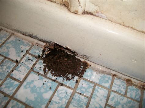 termites in bathroom what to do if you have termites termite inspections