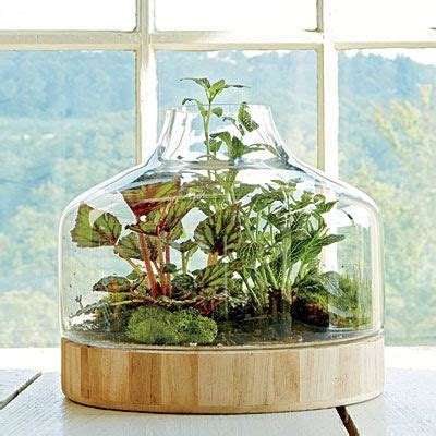 indoor container gardening ideas plant a glass house indoor container gardening