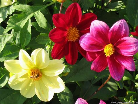 different images of flowers www imgkid com the image kid has it