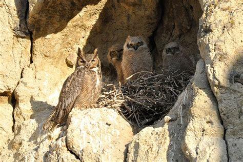 baker county blog some springtime wildlife news birds
