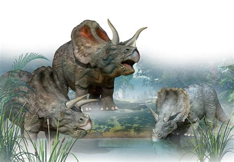 roeien verleden tijd dinosaurus wibnet nl