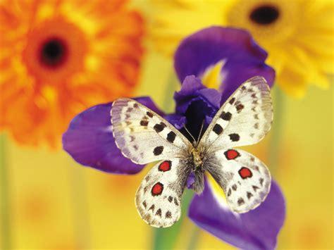 imagenes de mariposas blancas volando cosas que no sab 237 as de las mariposas im 225 genes taringa
