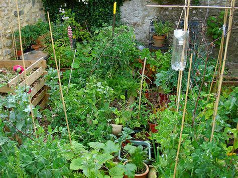 My Vegetable Patch Flickr Photo Sharing Summer Garden Vegetables