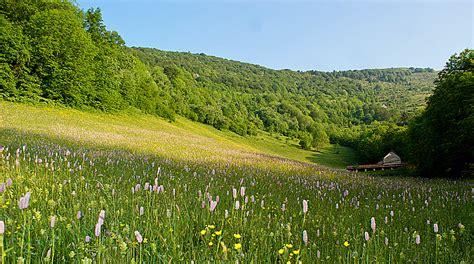 prati in fiore valle brembana escursioni nella quiete dei pascoli della